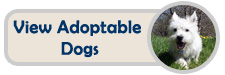 View our adoptable dogs