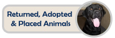 View our returned, adopted, and placed animals